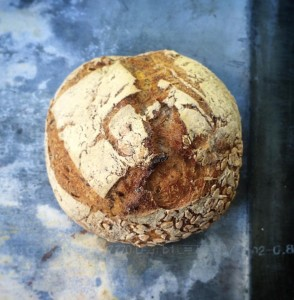 brood-1